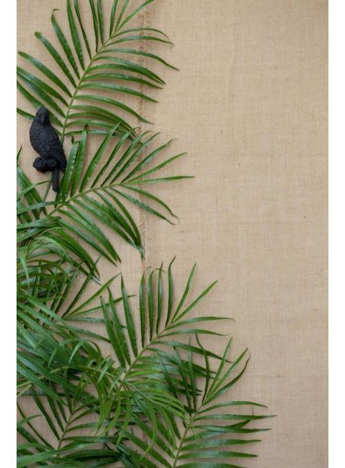 Serafina cacatoès noir