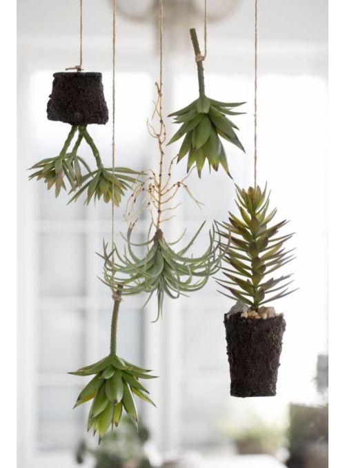 plante succulente vert