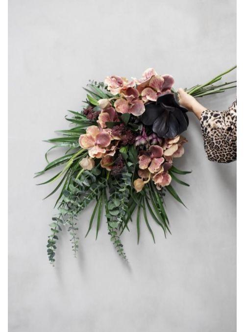 plante succulente bordeaux