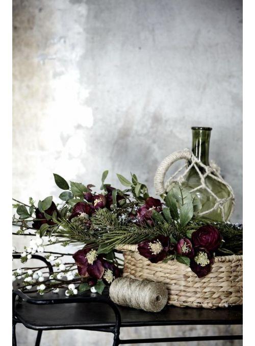 rose violet foncé