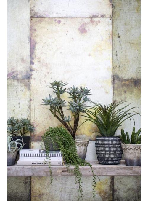 cactus vert