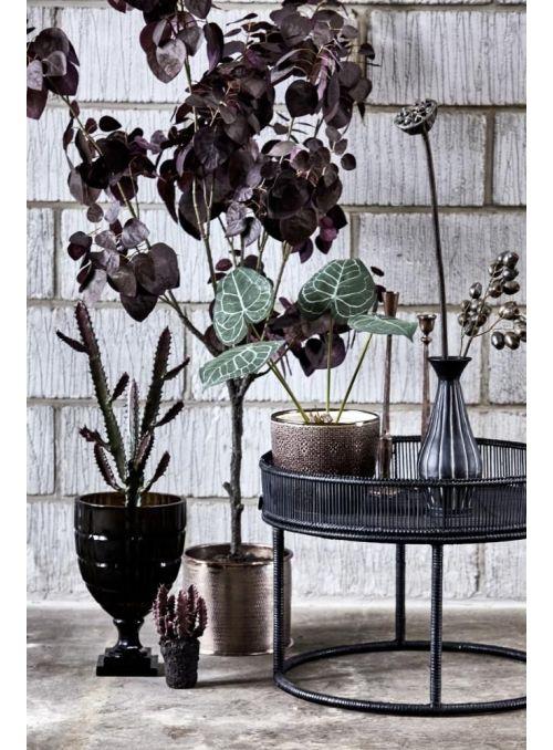 plante taro vert foncé