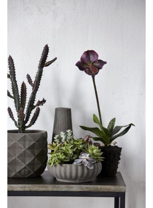 orchidée violet foncé